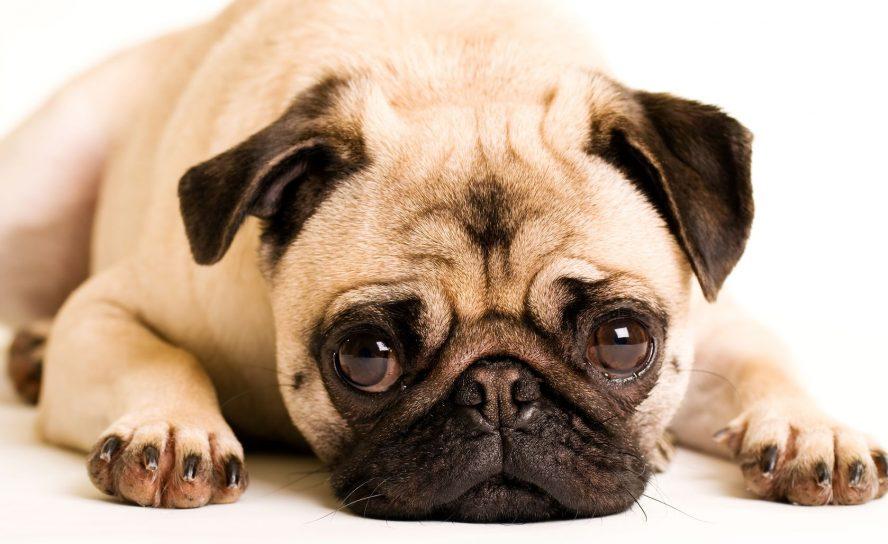 Tränensäcke mit gezielter Behandlung und Pflegeprodukten abmildern